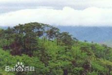 赤松麻栎林