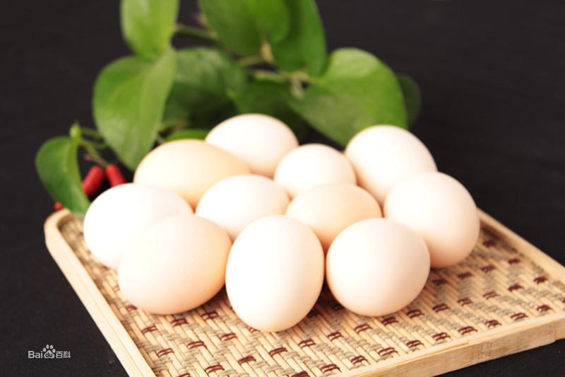 野山鸡和鸡蛋