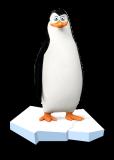 马达加斯加的企鹅图片 百度百科
