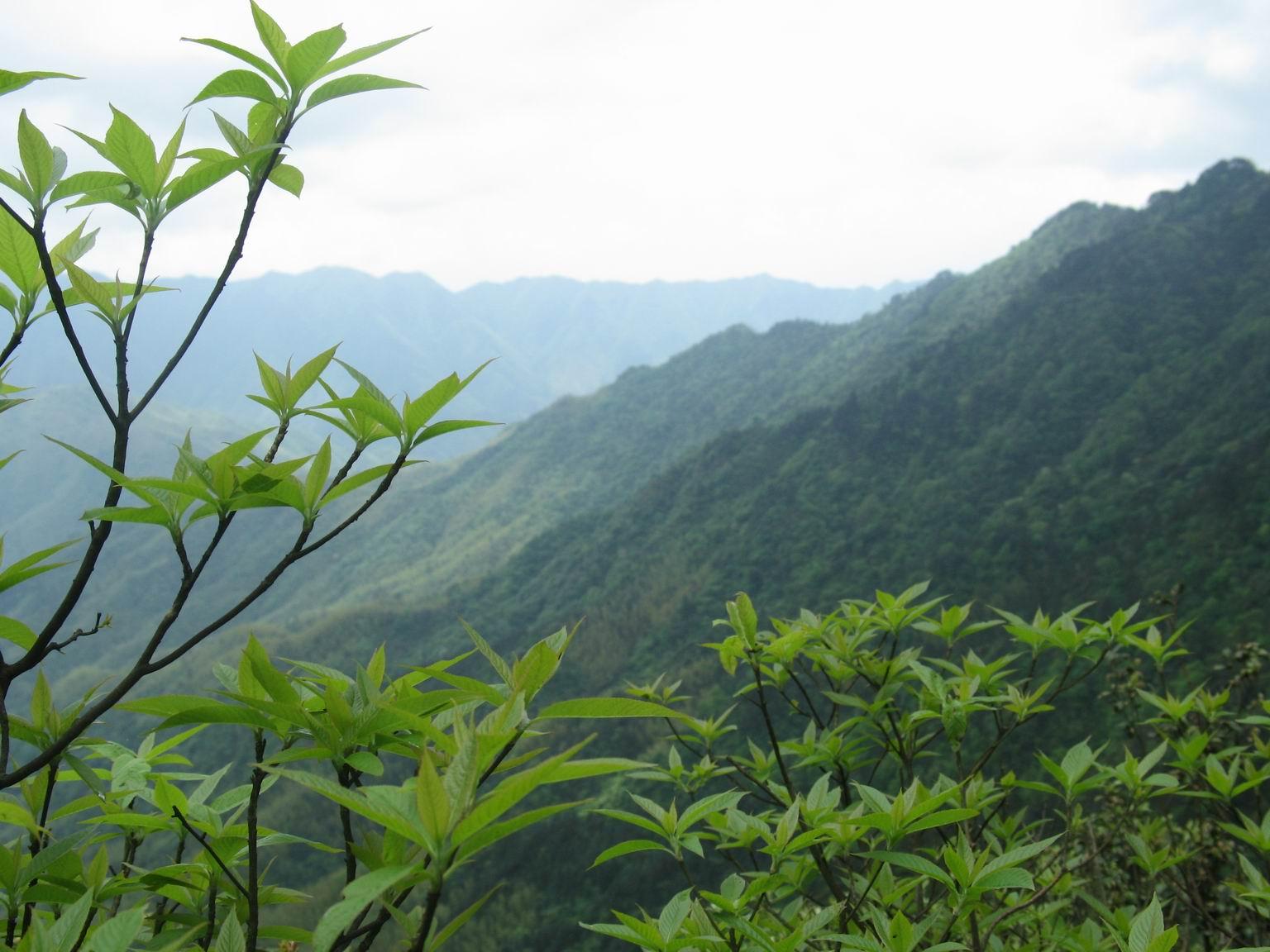 阳明山国家森林公园_百度百科图片