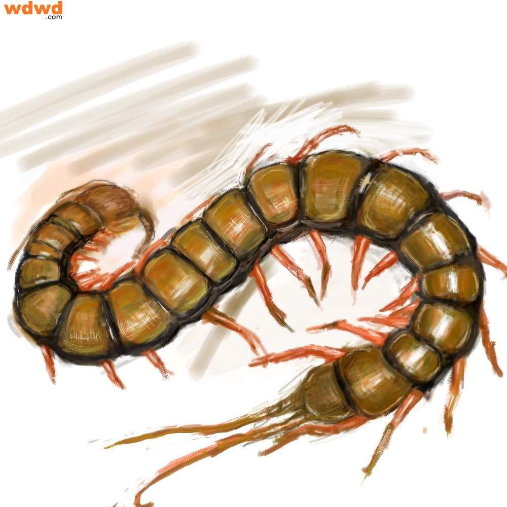 远古蜈蚣虫... F X 3