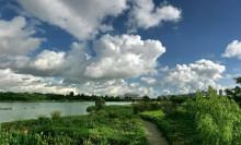 五缘湾湿地公园