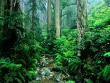 东南亚橡胶木林