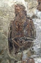 三叠纪生物