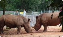 广州动物园动物
