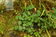 豆瓣绿图片集锦