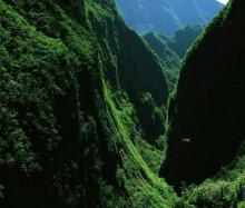 武威天祝三峡森林