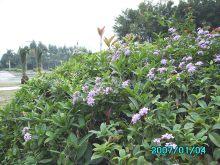 园林植物养护