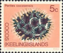 科科斯群岛滨珊瑚