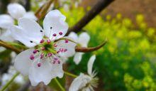 龙岗梨花园1