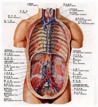 中国首例人体解剖