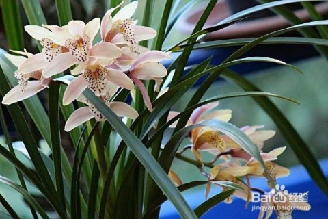 中国文化源远流长,大家快来看看中国的十大名花有哪些吧.图片