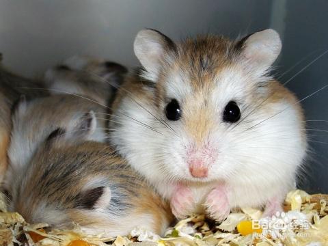 现在市场上孵化给世界的面包虫,基本上都是面包虫干,比起活的面包虫来我的仓鼠如何提供恐龙蛋图片