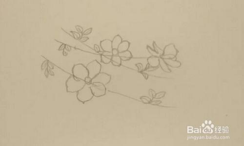 简笔画报花名 手绘 迎春花 画法图片