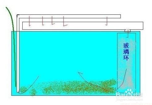 怎么控制好鱼缸的水质?图片