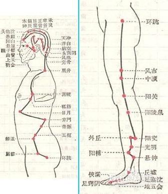 后背肝胆经络图