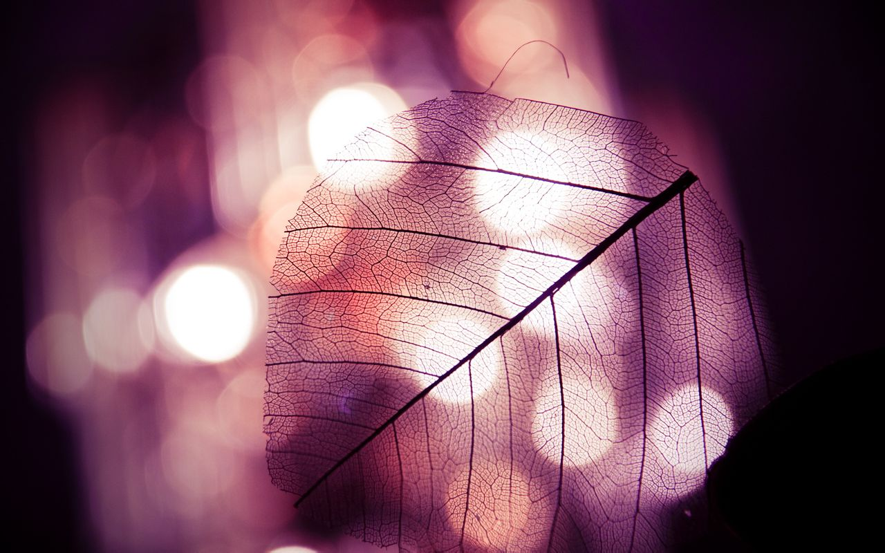 钢琴唯美意境女壁纸下载 篮球唯美意境壁纸 唯美意境伤感壁纸