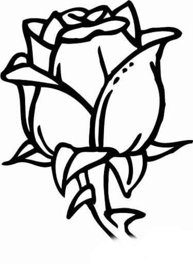 玫瑰 简笔画 根叶_玫瑰 简笔画 根叶图片
