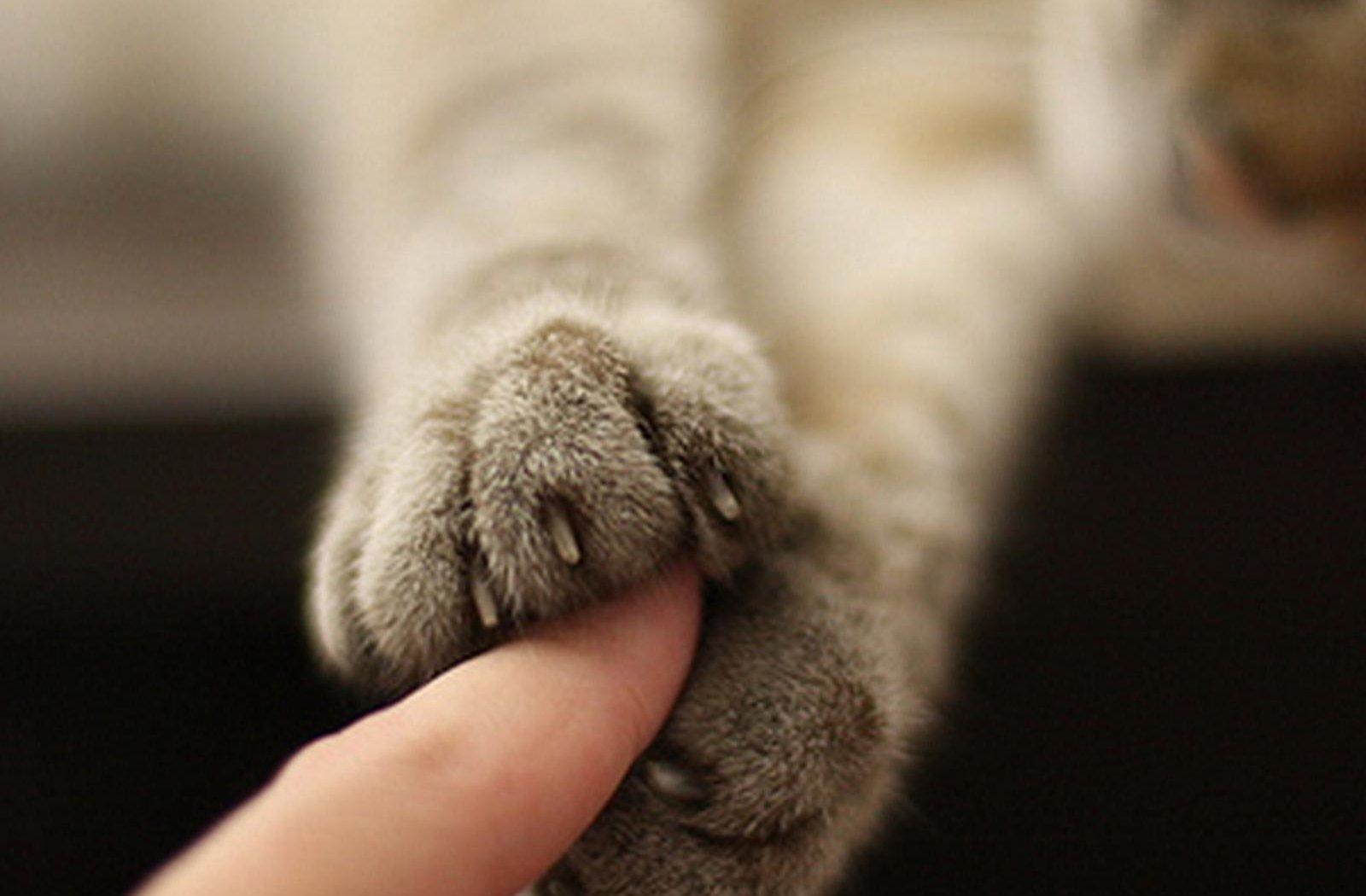猫爪牵手的表情包 拿去浪吧图片