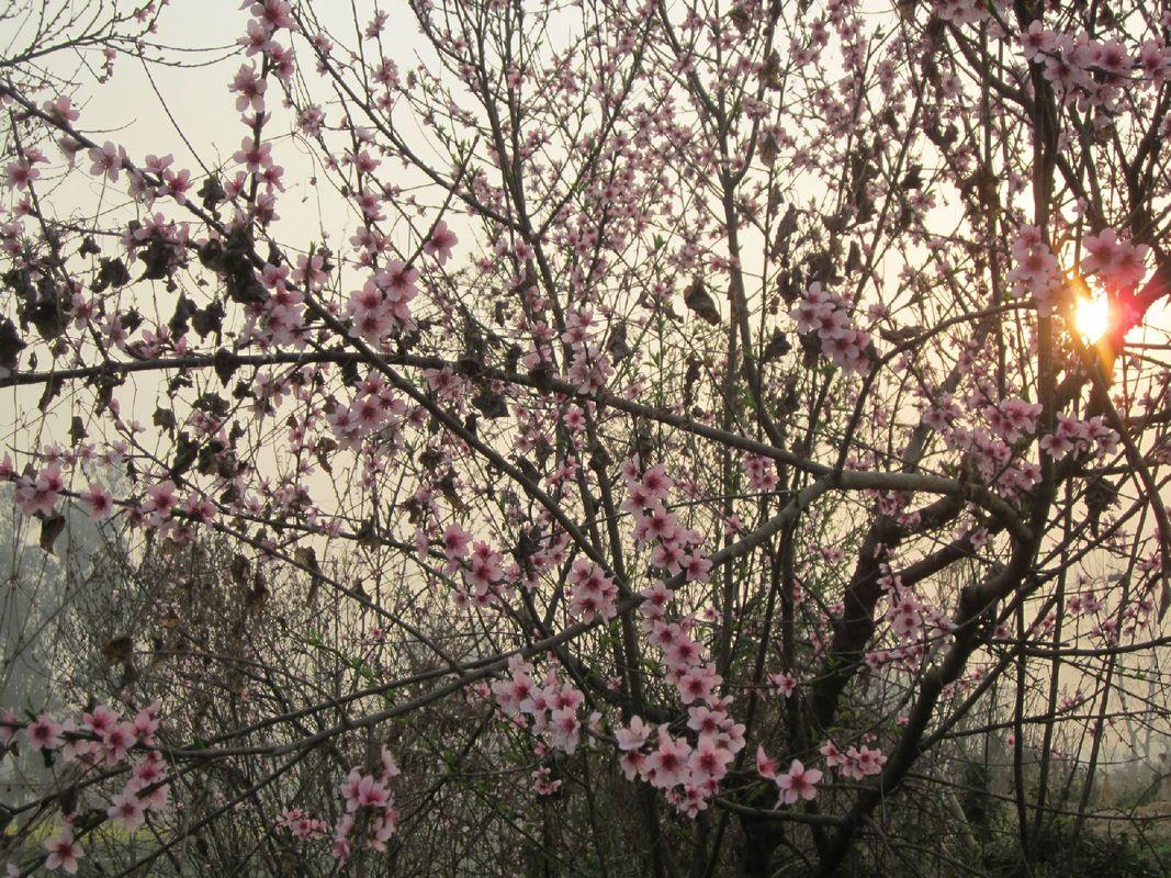 成都的春天,你在哪里?图片