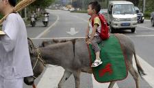 3岁娃骑驴上幼儿园