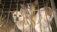 1300只猫狗被塞货车 爱狗人士狂追数百公里解救
