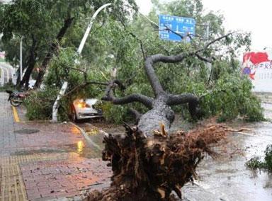 玉林遭狂风暴雨袭击