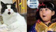 OMG猫网络走红 肉脸激萌惊呆状神似王诗龄