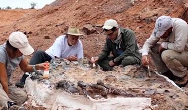 科学家发现2.2亿年前恐龙墓
