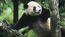 功夫熊猫再现盖世神功
