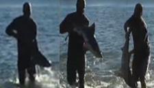 男子赤手空拳捞鲨鱼
