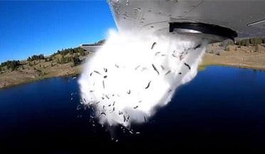 """高山湖泊""""人工降鱼"""" 数万条鱼从天而降"""