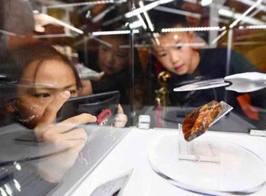 中国科学家首次发现虾琥珀
