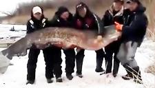 渔民在伏尔加河钓上巨物 五壮汉才抬动