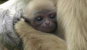 世上只有妈妈好!快来围观动物妈妈和宝宝的温馨一刻,心都萌化了