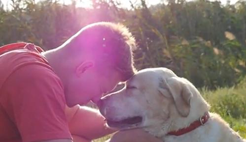 你最喜欢哪种狗?拉布拉多连续28年被评为美国最受欢迎的犬种!