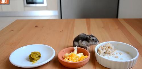 3种可以给仓鼠宝宝吃的奇葩食物,不忍直视