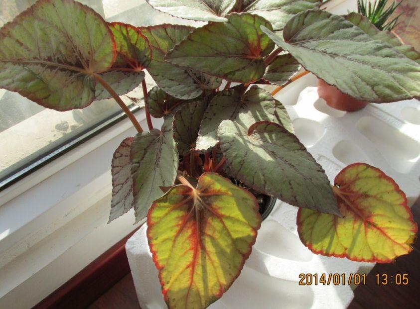 食虫植物 食肉植物 植物图片