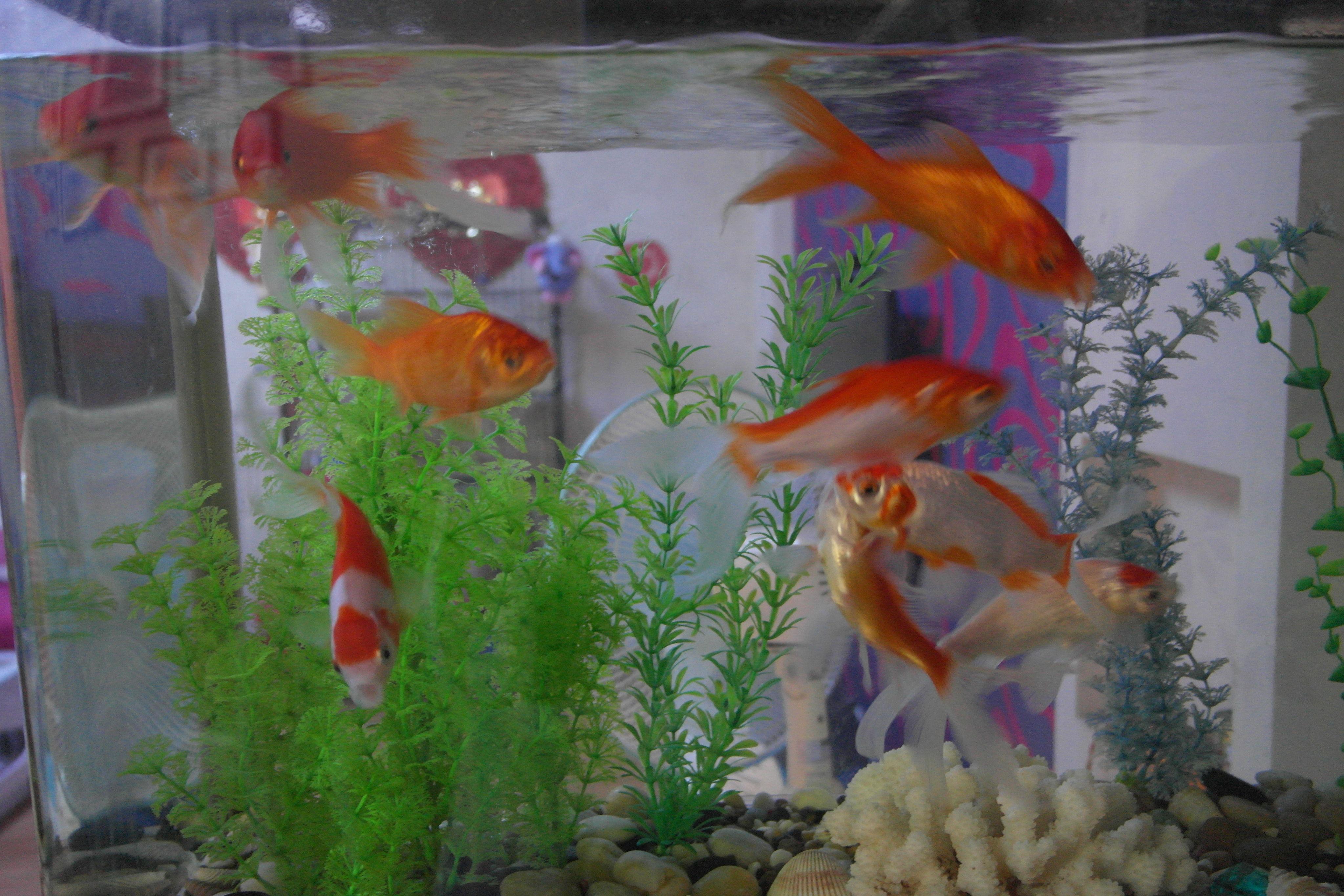 梦见家里进水了,到处都是鱼