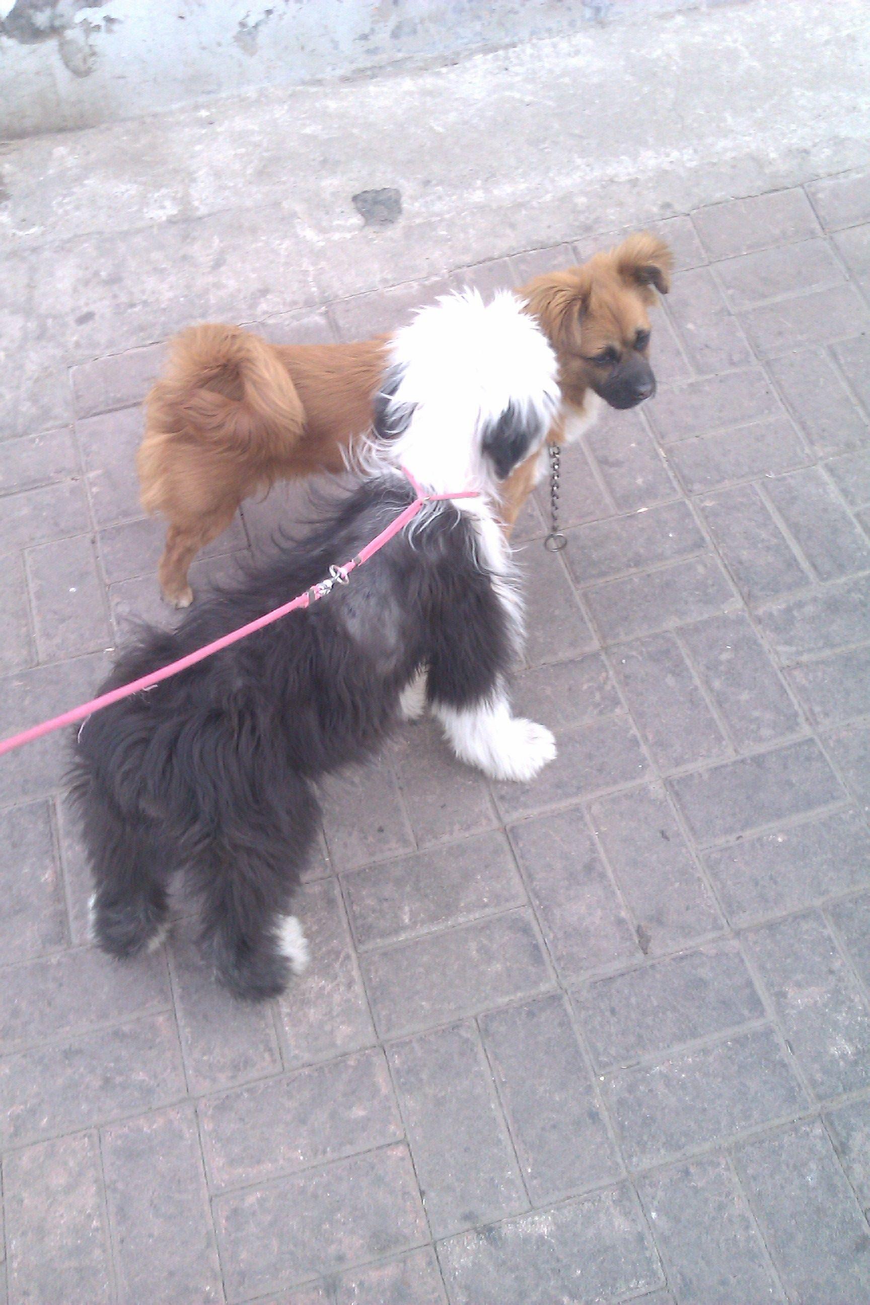 古牧三个月有皮肤病打了两针卖狗的说两个月能好现在图片