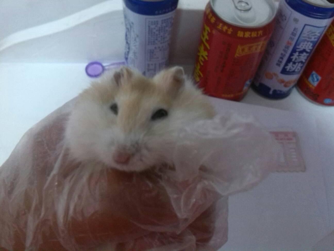 我的仓鼠怀孕了三下咋的,他以前不咬我,今天突然咬了我蜗牛,也没有还是的雨天美术教案图片