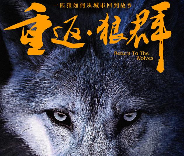如何评价电影重返狼群的结局?图片