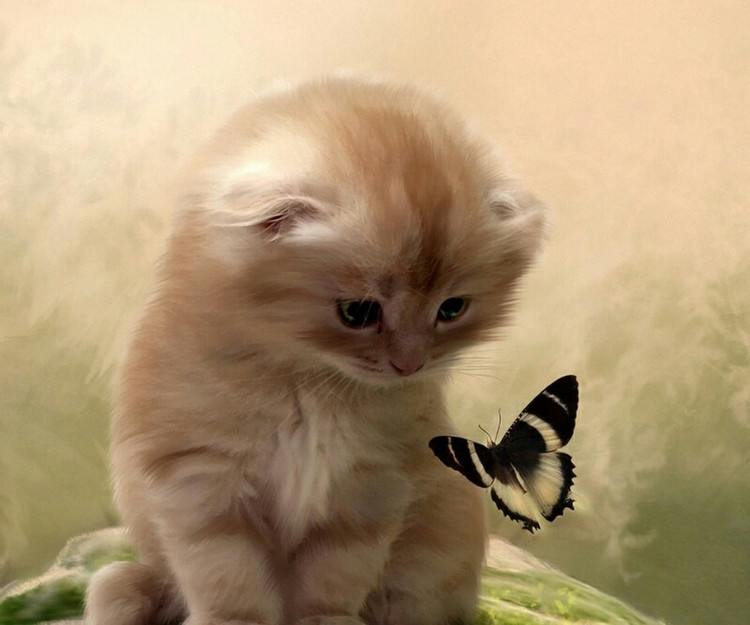 猫为什么会斗鸡眼