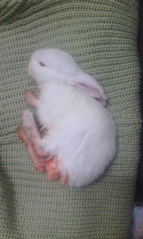 刚买的幼兔,胡萝卜吃多了,拉的屁股的便便,下午就给洗了下红色干吗腿乌龟吃虾还有行图片