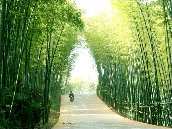蜀南竹海附近景点