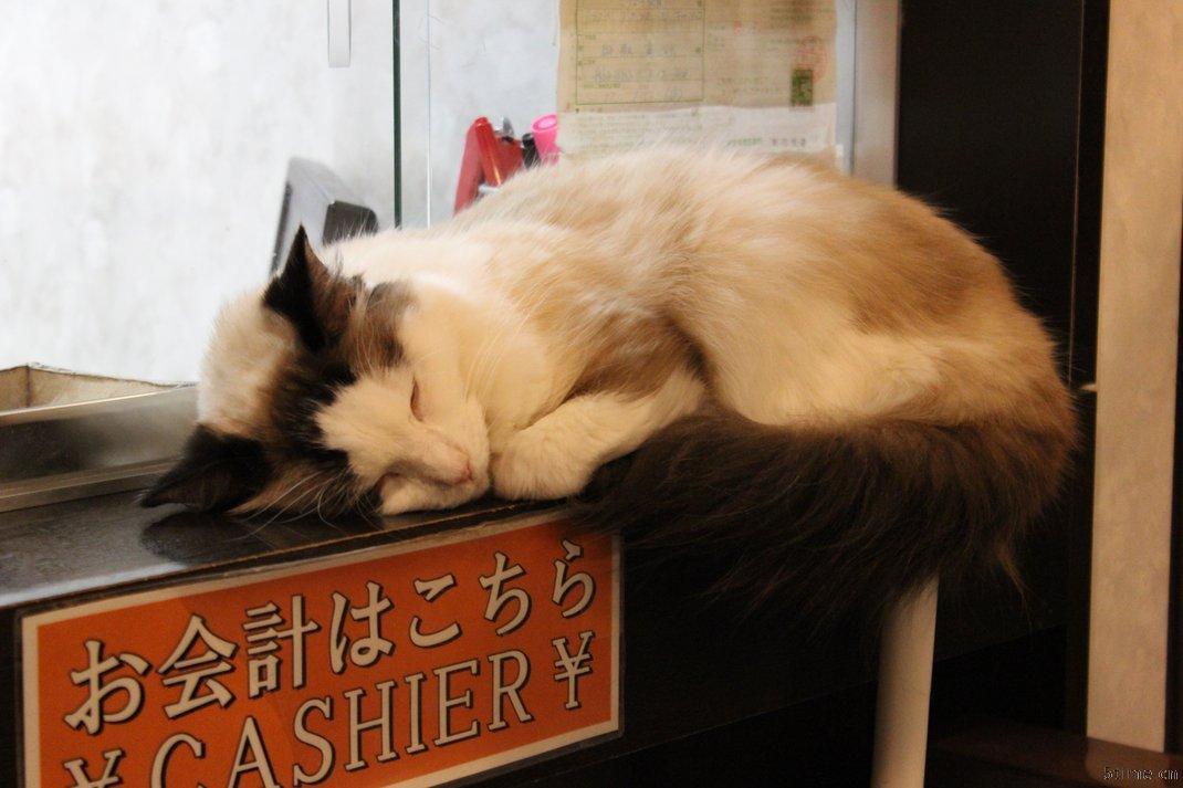 猫小主咖啡