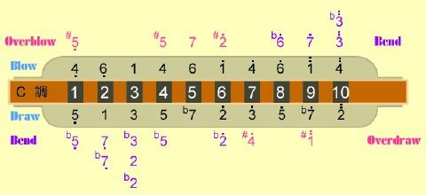 12孔复音口琴音阶图分享展示图片图片