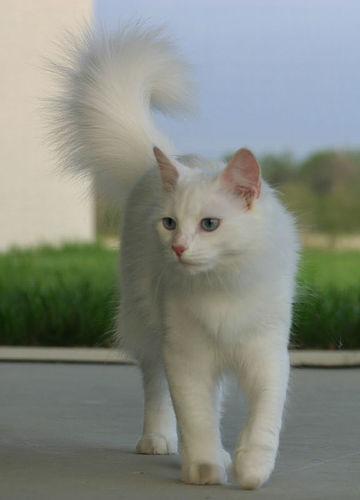 猫咪眼睛都有什么颜色