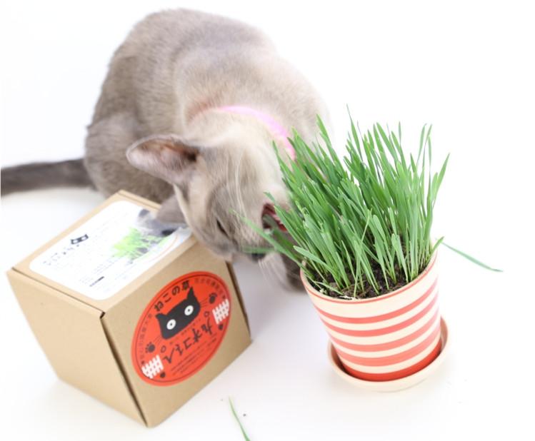 猫吃饱的样子