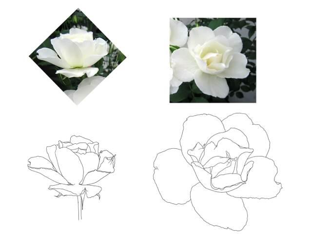 简笔画玫瑰的画法下载,简笔画荷花的画法,简笔画向日葵的画法